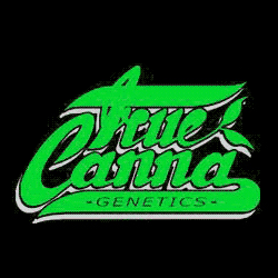 Seeds from True Canna Genetics