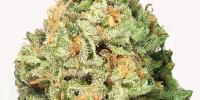 Heavyweight Seeds - Fruit Punch Auto cannabis seeds