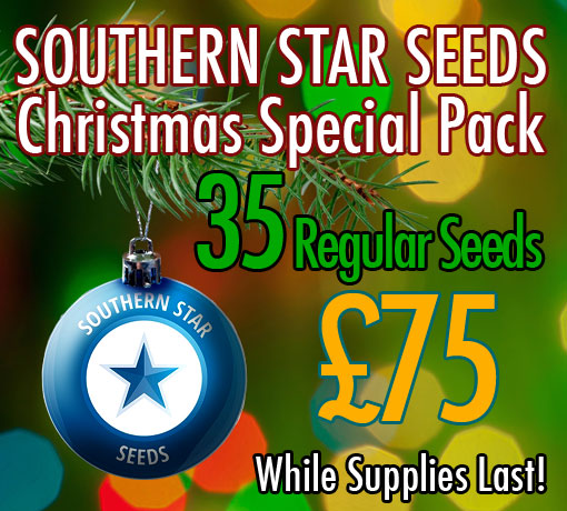 product/southern-star-seeds/christmas-special-pack/