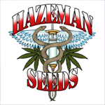 Seeds from Hazeman Seeds