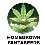 Seeds from Homegrown Fantaseeds