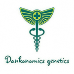 Seeds from Dankonomics Genetics
