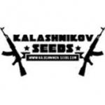 Seeds from Kalashnikov Seeds