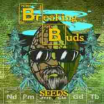 Seeds from Breaking Buds