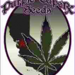 Seeds from Purple Caper
