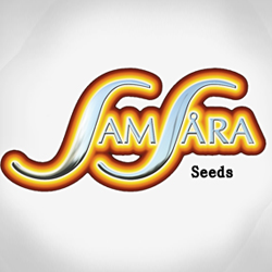 Seeds from Samsara Seeds