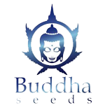 Seeds from Buddha Seeds