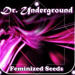 Seeds from Dr Underground