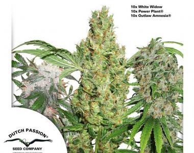 Dutch Passion - 30th Anniversary Mix Feminised Seeds cannabis seed