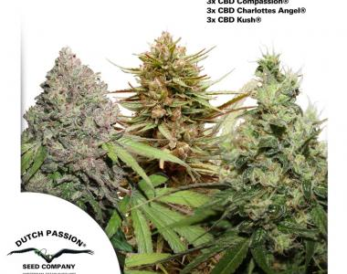 Dutch Passion - CBD Rich Feminised Mix cannabis seed