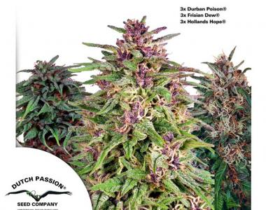 Dutch Passion - Outdoor Mix cannabis seed