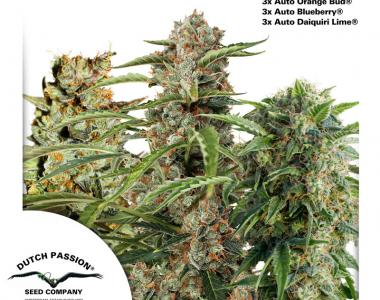Dutch Passion - Fruity Autoflower Mix cannabis seed
