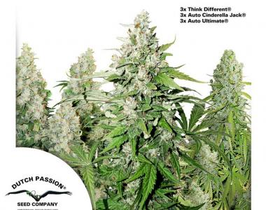 Dutch Passion - High Potency Auto Mix cannabis seed