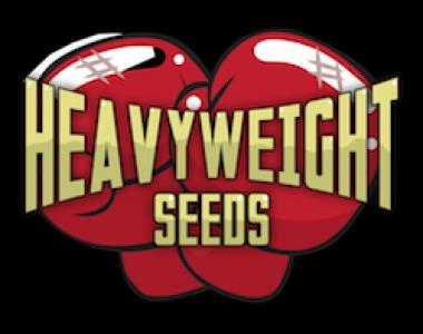 Heavyweight Seeds - Collectors Special cannabis seed