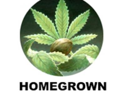 Homegrown Fantaseeds - Outdoor Mix cannabis seed