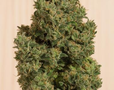 Humboldt Seed Organisation - Blue Dream CBD cannabis seed