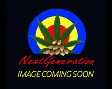 Next Generation - Medicine cannabis seed