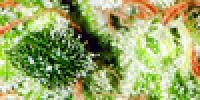 Kannabia Seeds - Gnomo Automatic cannabis seeds